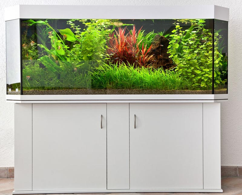 Aquarienbau brillant aquarium aquariumbau profiline for Aquarium 120x40x50